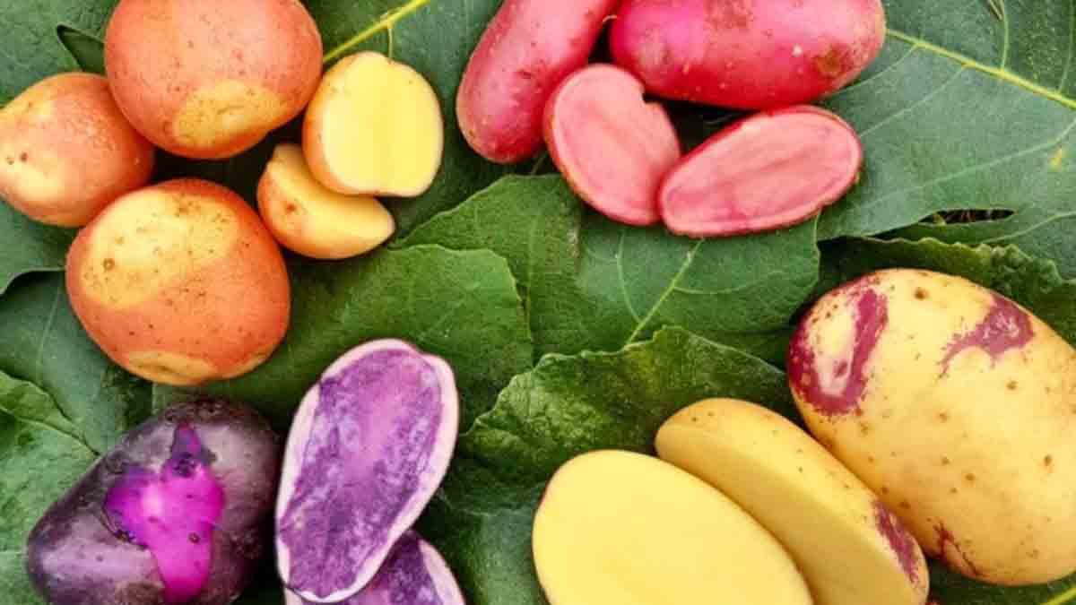 Pommes de terre : ces astuces qui marchent pour empêcher qu'elles germent !